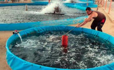 cara budidaya lele kolam terpal agar cepat besar